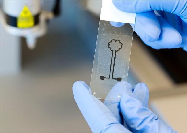 Stampanti 3D la cellulosa