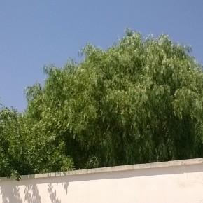 Fotocamera Lumia 435 3